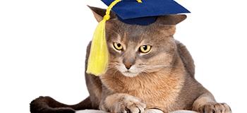 Як отримати кредит, якщо ти студент?