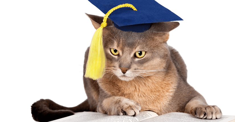 Как получить кредит, если ты студент?